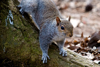 Look- Squirrel